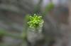 Le jardin des serres d'Auteuil (CpaKmoi) Tags: france paris jardin serres auteuil