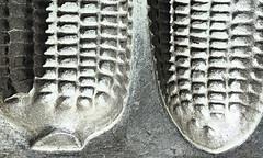 Found in the kitchen (Charos Pix) Tags: macromondays foundinthekitchen krusty crusty krustykornkobs cornbread aluminium aluminum castaluminium memberschoicefoundinthekitchen memberschoice