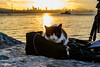 #Share a bag... (Aleem Yousaf) Tags: share flickrfriday cat istanbul bosphorus sunrise photography bag kitten glow reflections silhouette boat turkey travel