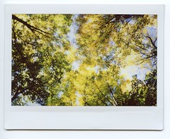 Autumn Start (Past Our Means) Tags: instax instant instaxwide indie fall autumn tree travel istillshootfilm film filmisnotdead filmphotography nofilter fujifilm fujifilminstax connecticut ct woods wilderness hiking mountain wanderlust sky blue colors forest 2017 analog analogue analouge polaroid instantphotography instantcamera colorful sleeping giant state park