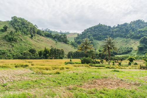 wiang kaen district - thailande 62