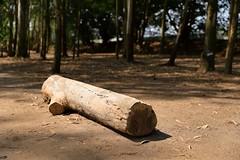 The Log (superzookeeper) Tags: 5dmk4 5dmkiv hk hongkong canoneos5dmarkiv ef2470mmf28liiusm wood namsangwai forest log eos yuenlong digital