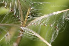 seeds (photos4dreams) Tags: forest21082017p4d gersprenz münster hessen germany naturschutz nabu naturschutzgebiet photos4dreams p4d photos4dreamz nature river bach flus naherholung canoneos5dmark3