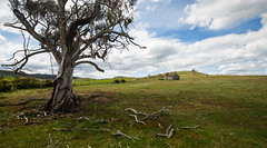 Traveller's Rest (Keith Midson) Tags: tree oatlands shed barn rural tasmania australia agriculture farm farming clouds cloud fence pasture grass field