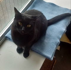 Jethro - 1 year old neutered male