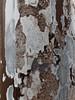 錆 RUSK (SHIBATA KEN) Tags: japan 日本 tokyo 東京 rusk 錆 texture テクスチャー