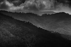 Ligurian forest (PascallacsaP) Tags: castiglionechiavarese velva liguria genova sestrilevante italy italia forest trees clouds dramatic valley hills silhouettes dark cloudy sunlight rolling fujifilm acros filmsimulation bw blackandwhite contrast