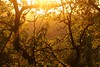 Tresor forestal (miquelopezgarcia) Tags: lestany moianes bosc natura nature rural canon canon760d eos tamronlenses capdesetmana holydays vacances viatge travel travelphotography 2017 estiu summer tourism turisme catalunya catalonia miquellopez amateur youngphotographers landscape sunset postadesol warm calid whitebalance