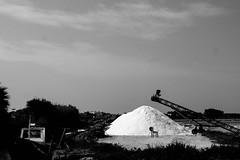 IMG_8285 (SalvoGulisanoFotografo) Tags: selinunte sicily greektemple