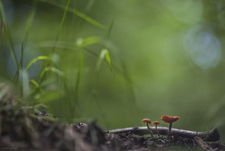 In a mushroomworld