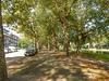 Heemraadsingel (sander_sloots) Tags: heemraadsingel rotterdam platanen trees plane platanus bomen canal