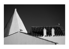 Nossa Senhora II (Robert-Jan van Lotringen) Tags: portugal algarve nossasenhora chapel cliff church tower gull pair duo bird black white noir blanc bianco nero building architecture religous chimney roof rooftop plaster animal composition