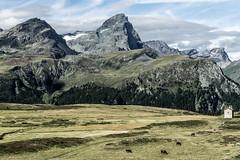 Mountain farming: The view (1/3) (jaeschol) Tags: europa graubuenden grischuna kantongraubünden kontinent schweiz suisse switzerland sur graubünden ch alp flix alpflix pizplatta