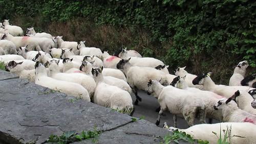 Tuesday, 22nd, Watching the sheep MVI_4449