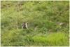 Alpenmarmot (HP030788) (Hetwie) Tags: bergen marmot knaagdier alpenmarmot oostenrijk murmeltier lake austria mountain nature meer natuur heiligenblut kã¤rnten kärnten at