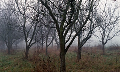 Film # 046 - Scan - 26 (Sven Kaschmir) Tags: minolta xd7 agfa vista 200 36 digibase c41 readytousekit 25 grad 13 min analog