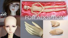 Migidoll Vampire Miho for adoption (kōmori) Tags: sd 13 bjd boy migidoll miho vampire ball jointed doll fs fa for adoption