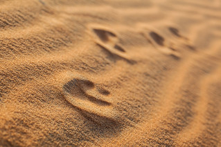Desert Days, Just Leave Footprints...