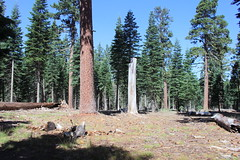 A stand of ponderosa pines (rozoneill) Tags: lassen volcanic national park chaos crags crag lake manzanita wilderness hiking california redding