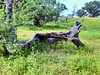 tronco (yajat54) Tags: nogales sonora picnic terrenos cabañas cabins nature naturaleza