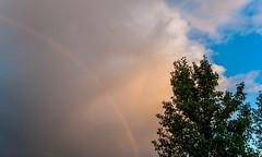 Rainbow and Tree (ruimc77) Tags: d700 nikkor 28mm f28 ais battle creek mi michigan usa rainbow arcoiris arcoíris nature natureza naturaleza color colour cores colorido colorful nikond700 etatsunis eua eeuu сша 미국 statiuniti 美国 الولاياتالمتحدةالأمريكية アメリカ合衆国 ארהב미국estados unidos