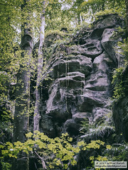 DSC_2045bw (Roelofs fotografie) Tags: wilfred roelofs nikon d5600 2017 landscape luxemburg mullerthal tree green color rock old fotgrafie forest outdoor plant photoshop sky