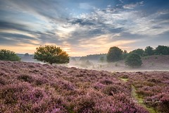 Purple sunrise (Ellen van den Doel) Tags: zonsopkomst natuur landscape veluwe nature mist boom nederland outdoor hill heuvel clouds sun summer 2017 weather landschap augustus berg heide myst tree netherlands heather posbank sunrise mountain rheden gelderland nl