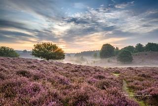 Purple sunrise