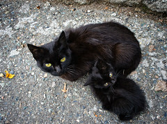 I asked for the mother's permission! (Tigra K) Tags: haghpat loriprovince armenia am 2011 cat funny portr