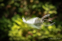 la vida es como una pluma que se lleva el viento - Life is like a feather that carries the wind (breijar - MARCOS LOPEZ ALONSO) Tags: life is like feather that carries wind la vida es como una pluma que se lleva el viento d500 nikon 1680