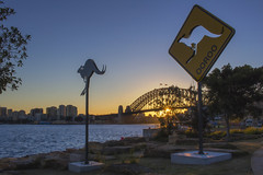 OOROO (S♡C) Tags: sculpturebythesea barangaroo sydney sculpture kangaroo signs morning sunrise sydneyharbourbridge sydneyharbour barangarooreserve