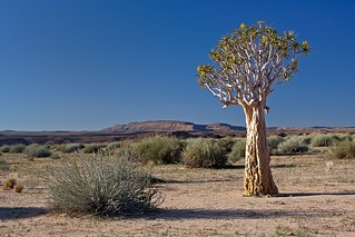Desert with Quiver Tree