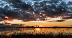 Pelican City DSC_5207 (BlueberryAsh) Tags: wtp birds pelican australianpelican westerntreatmentplant pointwilson sunset water cloudsstormssunsetssunrises clouds nikond750 nikon24120 lake pond