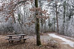 Le chemin givré (Lucille-bs) Tags: europe france bourgogne côtedor dijon combeàlaserpent hiver paysage chemin givre arbre table banc feuille