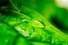 After the rain... (jose_maron) Tags: tree plant green nature wild garden macro macroshot water rain wet leaf drops light bight macro105 leaves trees plants flower flowers waterdrops