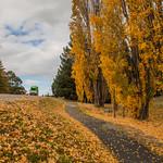 On the way to Puzzle World, Wanaka, New Zealand thumbnail