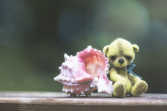 button does not like seashells (rockinmonique) Tags: button juneflickrgalsmeetup sunshinecoast shell tiny teddybear bear toy small bokeh yellow pink green moniquew canon canont6s tamron copyright2017moniquew