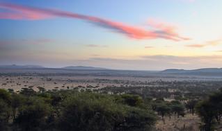Serengeti Morning Mood