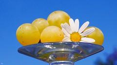 Plaisir d'été (YᗩSᗰIᘉᗴ HᗴᘉS +7 000 000 thx❀) Tags: summer été fruit flower blue color hensyasmine macro raisin glas verre cristal crystal loisir flickr saariysqualitypictures flickrclickx 7dwf