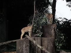 1994_Singapore_2016-07-18_Photo_295 (Matthias & Paula) Tags: singapore sentosa kuala lumpur malaysia cameron highlands zoo japanese gardens