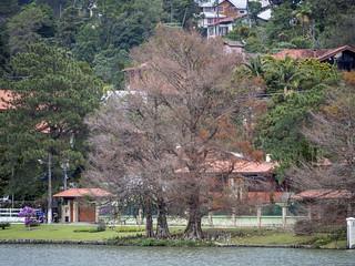 Árvores Peladinhas... ;-)