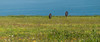 Entre la hierba (Oscar F. Hevia) Tags: prohibidoadelantar señal campo hierba yerba mar forbiddenover signal field grass sea 2017 asturias asturies cabopeñas españa paraísonatural principadodeasturias spain verano