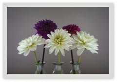 Blumengruß zum Wochenende (Körnchen59) Tags: flower blumen dahlien rahmen gläser sony körnchen59 elke körner