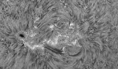 Sun in H-Alpha on August 26th 2017 (Photon_chaser) Tags: sun sunspots solar spicules sunspot spicule sunsunspots stack alpha achromat asi andover anover25mmblackingfiltermountedinthenosepieceoftelevue4xpowermatetelecentric quark quarkpstdoublestackedetalons quarkmodpstdsetalons prominences pst coronado chromosphere