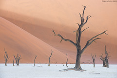 Still stand (Jirawatfoto) Tags: namibia deadvlei sossusvlei dead africa park national camelthorn vlei red desert travel sand blue dune sky namib natural landscape tourism scenery famous african dry clay sunlight pan acacia beautiful trees namibnaukluft naukluft nature tree orange outdoor day arid