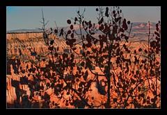 Bryce Shadows (Seeing Things My Way...) Tags: shadow silhouette brycecanyon tree utah usa rock canyon
