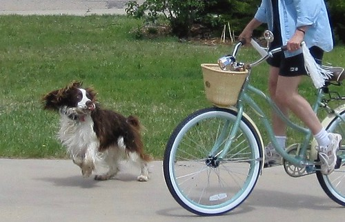 Photo - Thatcher was almost more excited about my bicycle than I was...and I was pretty thrilled. – Version 2