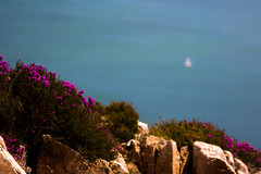 Blurry sailboats and heather (A Costigan) Tags: heather sailboat