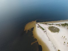 Fred Howard Park (Tryfont) Tags: bird seagull ocean tarpon springs nikon d3400 pelican sky water salt sand surf surfer wind kite air flying great blue heron dji spark beach birds eye view