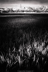 Nature || B&W || Bangladesh (Shahnewaz_Khan) Tags: art nature bangladesh canon canon60d landscape landscapephotography landscapephoto canon1022 catchy catchycolors naturephotography fav canonlens canonphotography canonphotos naturelovers daylight dark beautiful beauty beautifulbangladesh beautifulnature beautifulsky black colorplurge dramatic hdr wide wideangle wideanglephotography paddy outdoor outdoorphotography clouds picoftheday flickr green igworlclub night nightscape nightsky lights lightfantastic heaven hotshotz hillside photographersofbangladesh photography village view rice primelens proig leaves composition 50mm 50mm18 netgeotravel concept conceptphoto conceptual conceptualphotography travel travelphotography trees tree morning ultrawide sunlight sunshine cloud colorful